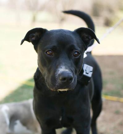 Lara Adopted (6/8)
