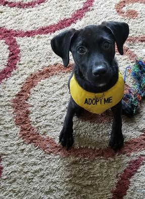 Sam - Adopted (6/2)