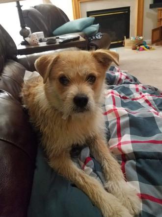 Benji Adopted 6-15