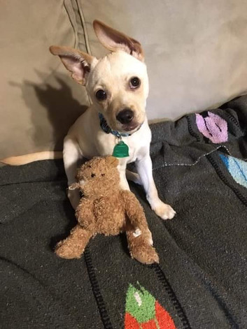 Toby - Adopted (5/6)