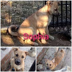 Sophia - Adopted (5/4)