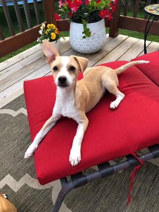 Frankie - Adopted (5/22)