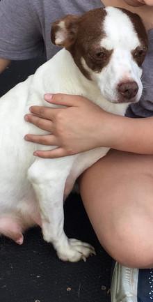 Hazel Adopted 6-14