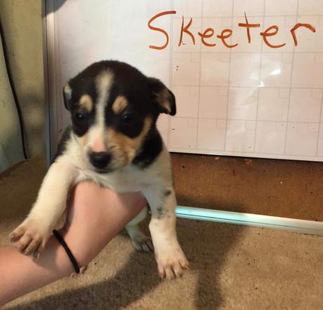 Skeeter Adopted 6-13