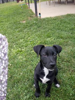 Arya Adopted 6-12