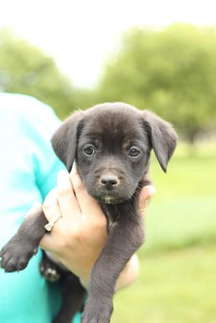 Onyx - Adopted (6/3)