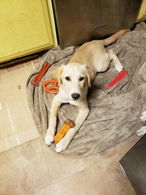 Margot Adopted 6-16