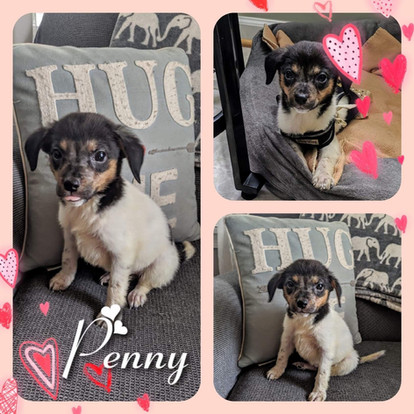 Penny 7-20