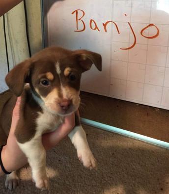 Banjo - Adopted (6/2)
