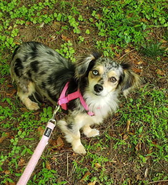 Nira Adopted (6/8)