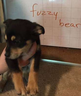 Fuzzy Bear - Adopted (6/2)