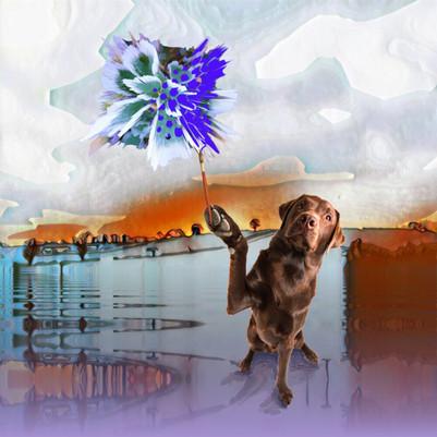 Dog Vision.  5.2.19
