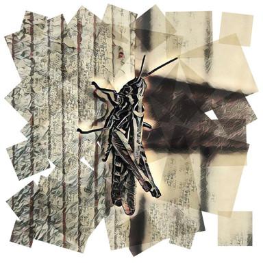 Grasshopper.  27.8.19