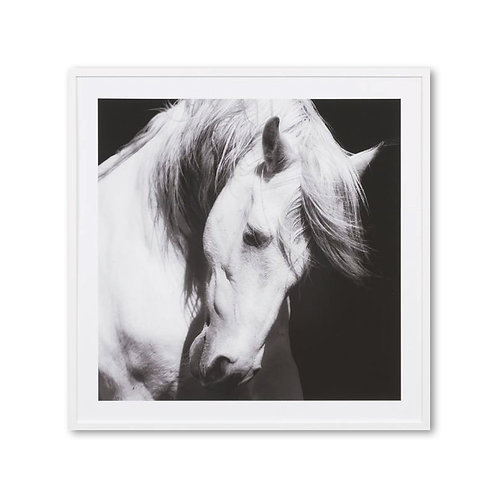 Photographic Framed Majestic Horse Print