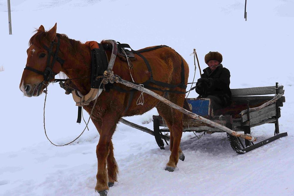 Cheval kirghize et son cavalier