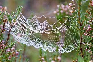 Faszien wie Spinnennetz (1).jpg