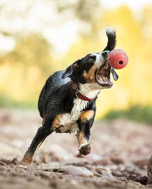 Hundeshooting Frankfurt