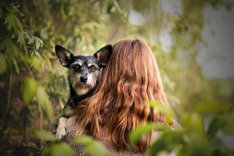 Katharina Thielmann - Hundefotografie, professionelle Tierfotografie Frankfurt Bad Homburg Rhein-Main Wetterau Hessen, professionelle Hundefotografie Frankfurt Bad Homburg Rhein-Main Wetterau Hessen