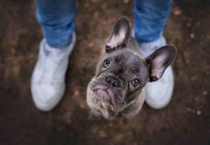 Hund, Hundeshooting, Fotoshooting Hund Hessen, Hundeshooting Frankfurt, Hund Action, Hund Portrait, Tierfotografie, Tierfotografie Hessen, Hundefotografie Bad Homburg, Französische Bulldogge