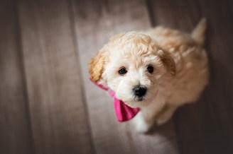 Welpe im Studio, Welpenfotografie, Hund, Hundeshooting, Fotoshooting Hund Hessen, Hundeshooting Frankfurt, Hund Action, Hund Portrait, Tierfotografie, Tierfotografie Hessen, Hundefotografie Bad Homburg