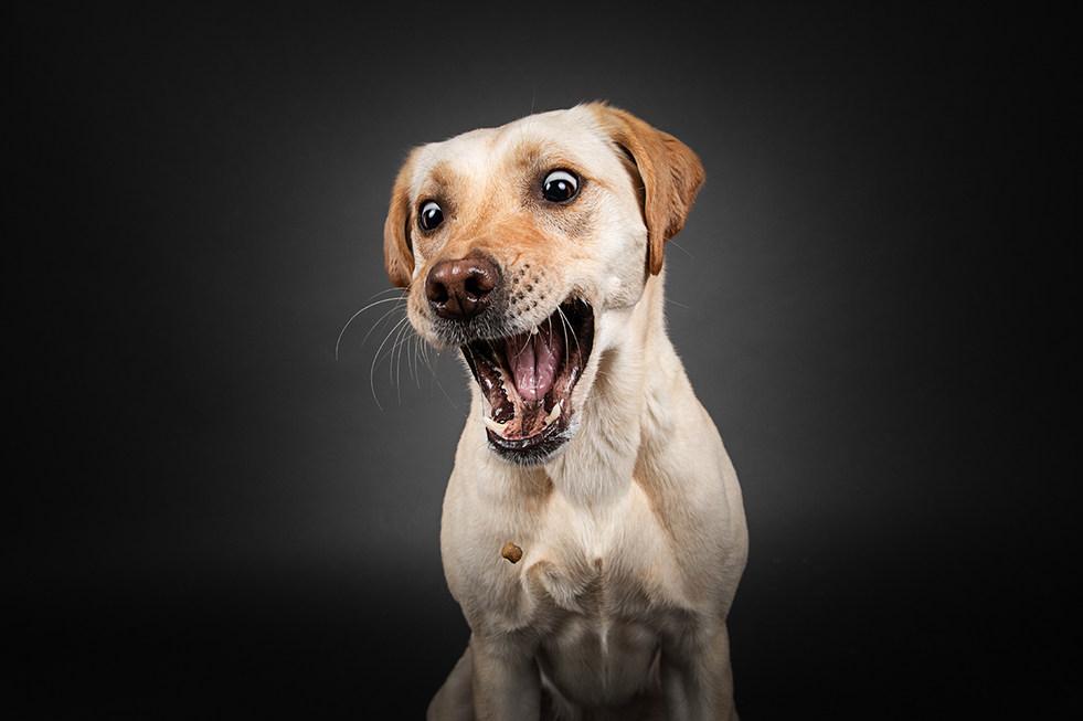 Hund, Hundeshooting, Fotoshooting Hund Hessen, Hundeshooting Frankfurt, Hund Action, Hund Portrait, Tierfotografie, Tierfotografie Hessen, Hundefotografie Bad Homburg, Studiofotografie Hund, Studiofotografie Hund Frankfurt, Leckerliefotos