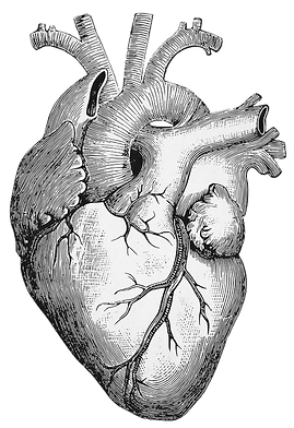 Healthy Heart By Dr. Meyer