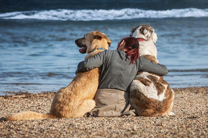 chien relation.jpg