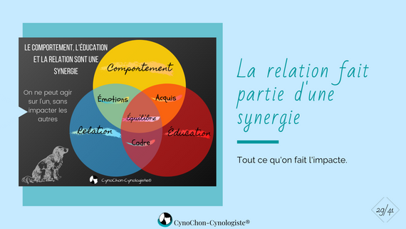 synergie relation éducation comportement
