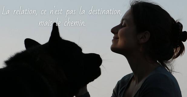 Renforcer la relation avec son chien.png