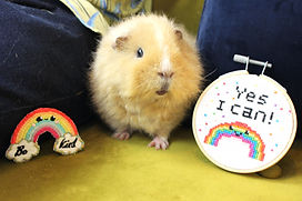 Crumpet - rainbow patch and yes I can kit