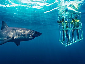 Shark-Cage-Diving-Cage-e1539249981760.jp