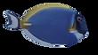 FISH-2 5.png