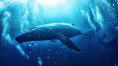 Underwater Realm
