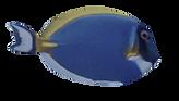FISH-2 3.png