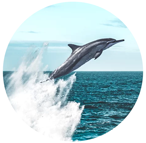dolphin-09.png
