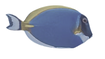 FISH-2 4.png