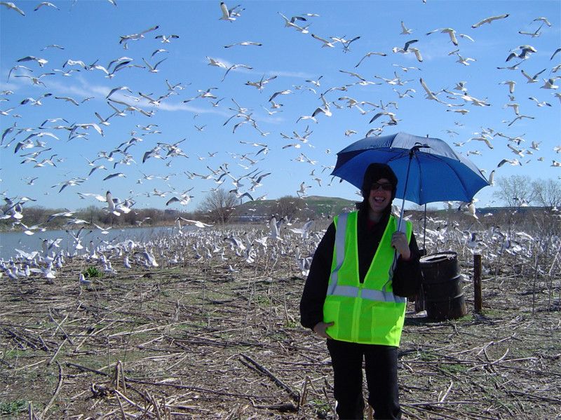 Make sure to bring your umbrella if you have a large population of birds!