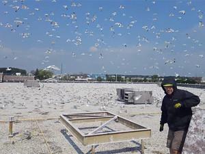 Pest Bird Control, Abatement, Removal, Deterrent & Manaagement Service Prevents Bird Attacks