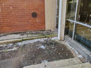 Bird Control Service: Poop Removal & Bird Deterrents