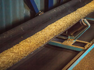 food-processing-grain.jpg