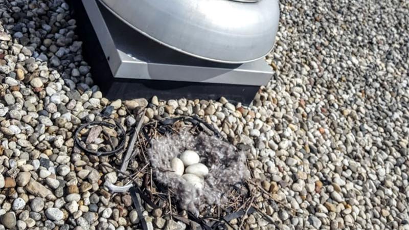 Goose Nest Management: Rooftop HVAC Nest