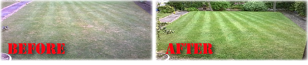 lawn treatment,Green Frog Landscaping, Bolton, Atherton, Farnworth, Horwich, Leigh, Warrington, Wigan, Manchester, Hale, Sale, Wilmslow, Westhoughton, garden, maintenance, gardener, lawn, care, treatment, weed, feed, scarifying, scarify, aeration, rent, fi