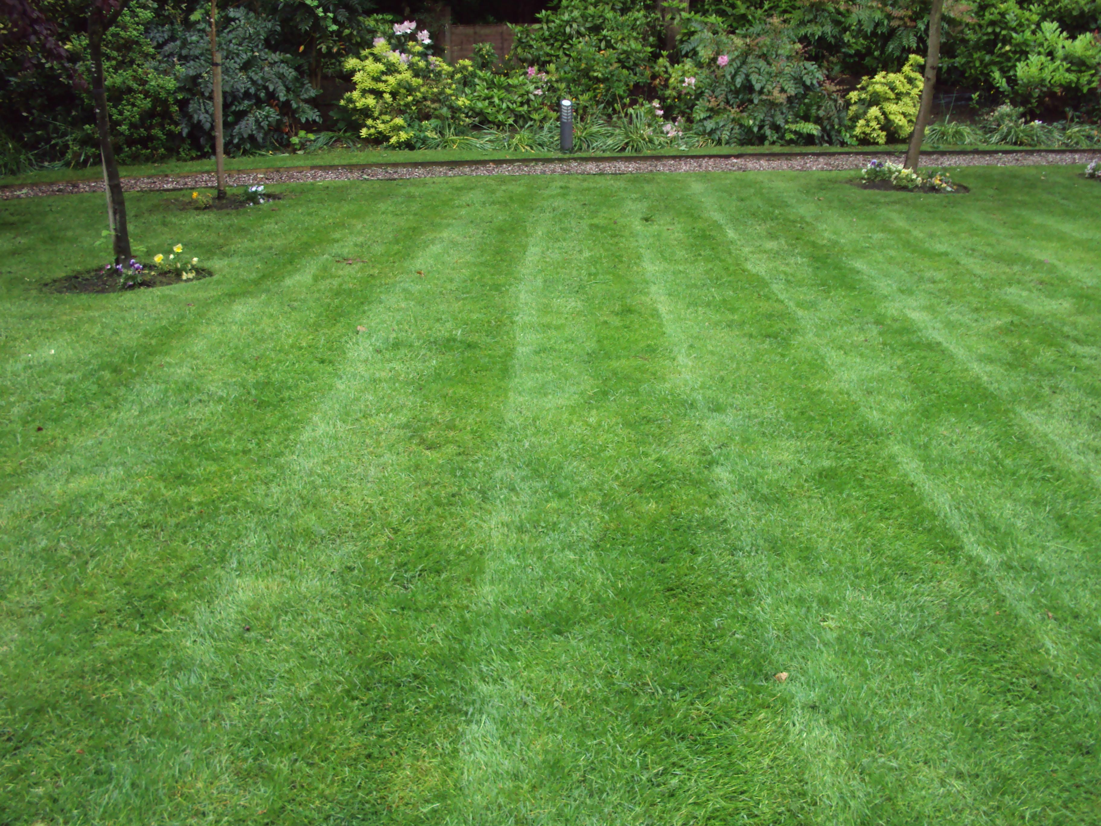 Stripes in Lawn