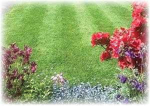 bolton, wigan, horwich, farnworth, leigh, bury,Green Frog Landscaping, Bolton, Atherton, Farnworth, Horwich, Leigh, Warrington, Wigan, Manchester, Hale, Sale, Wilmslow, Westhoughton, garden, maintenance, gardener, lawn, care, treatment, weed, feed, scarify