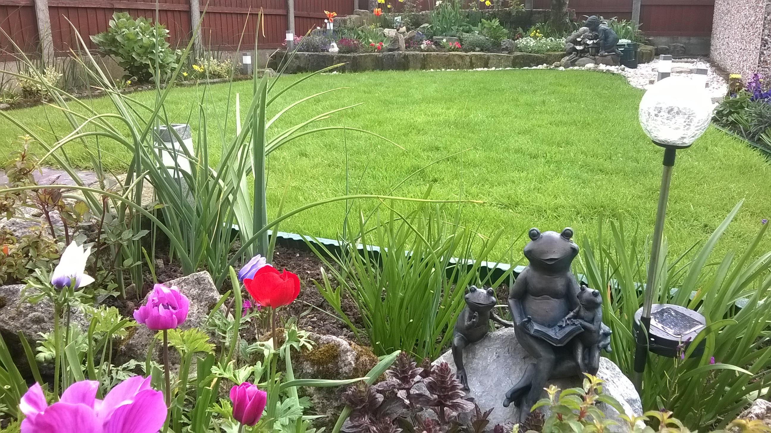 Frogs in Lawn