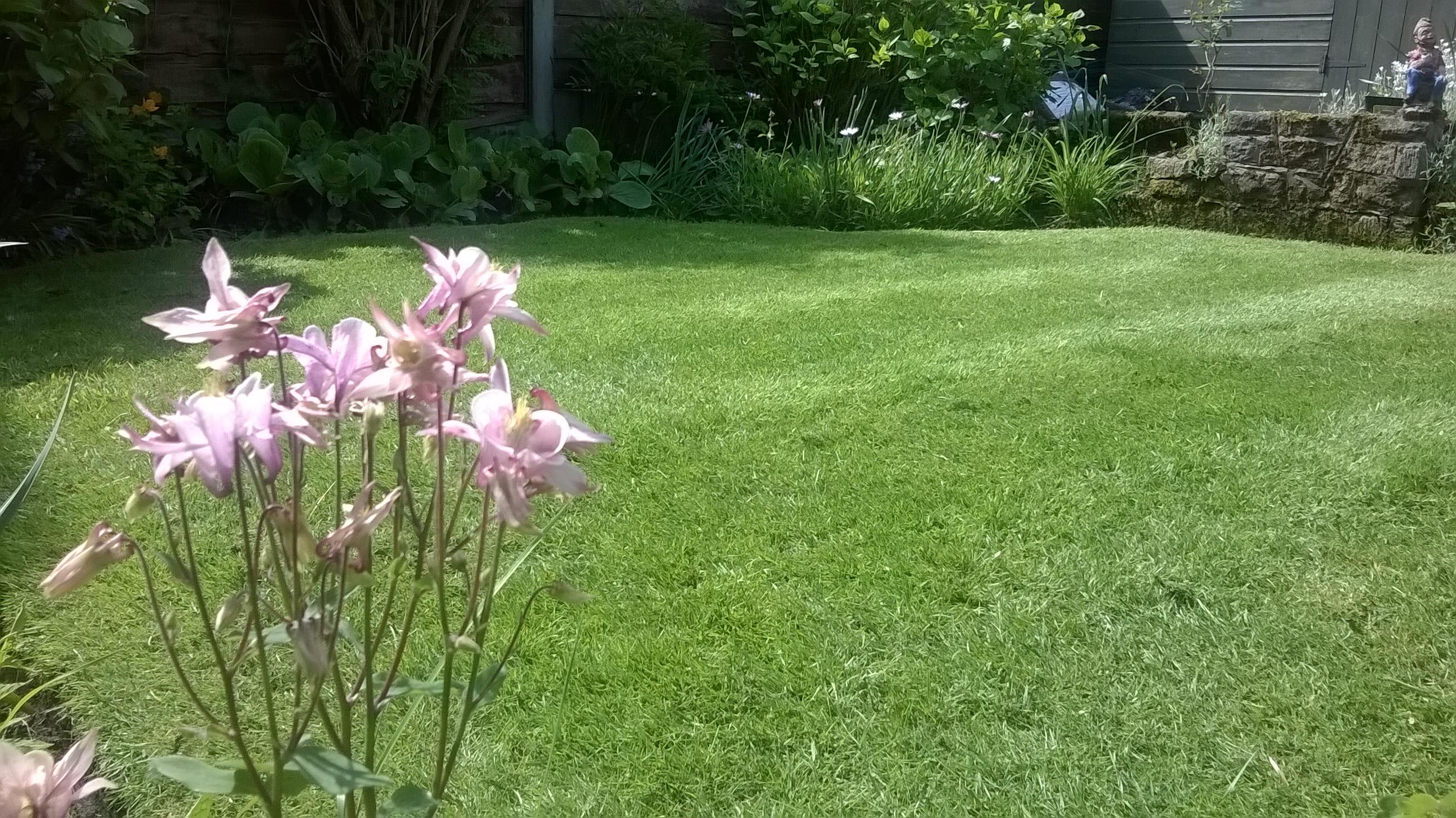 Lush Lawns