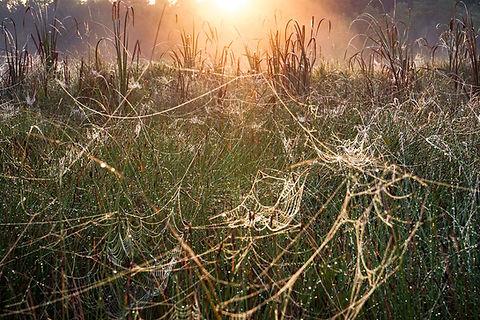 Silver-strands-_-Cameron-Wilcox.jpg