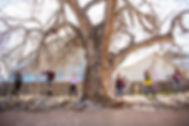 treelaugh.jpg