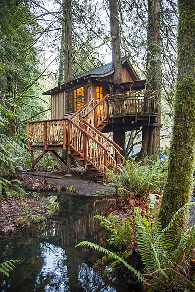 12202018_treehouse_164734-780x1170.jpg