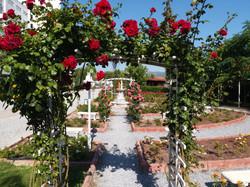Güllerin Harika Renkleri...